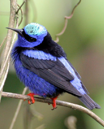 Tour de Observación de Aves
