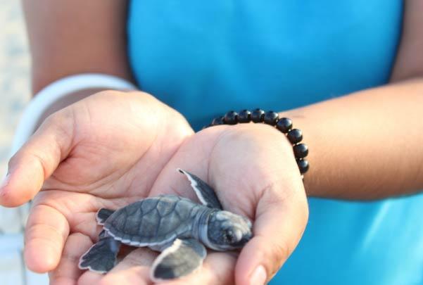 Bioluminicencia y liberación de tortugas