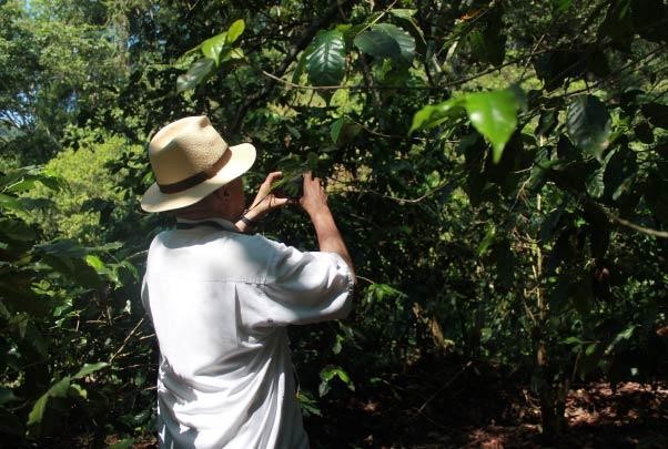 Experiencia del Café - Ruta del café (Salida desde Tepic)