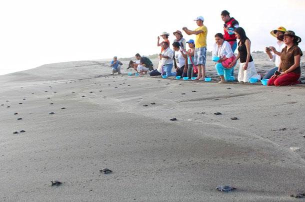 Tour de liberación de Tortugas Marinas
